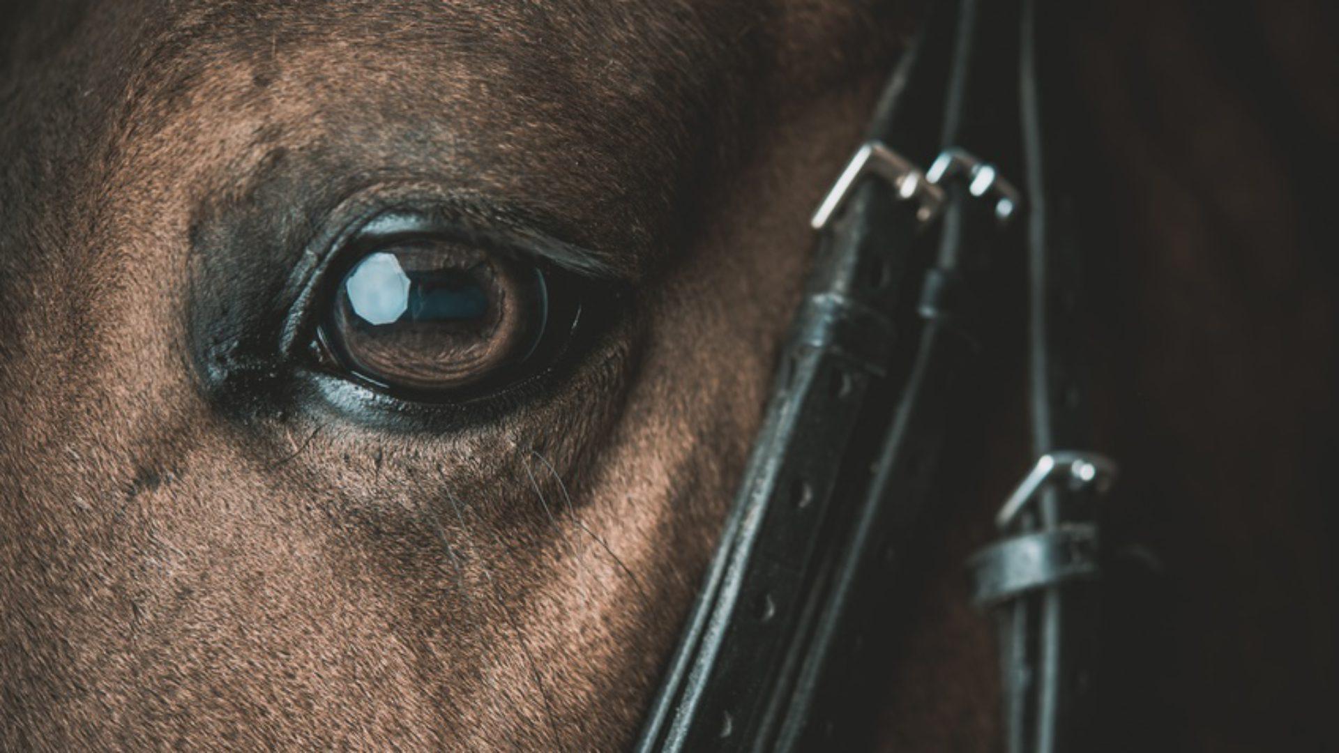 Der Pferderechtsanwalt